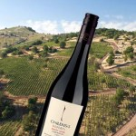 Chilensis Pinot Noir – A Great Buy
