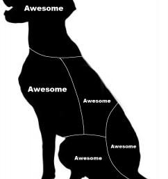 cat pet diagram [ 885 x 1200 Pixel ]