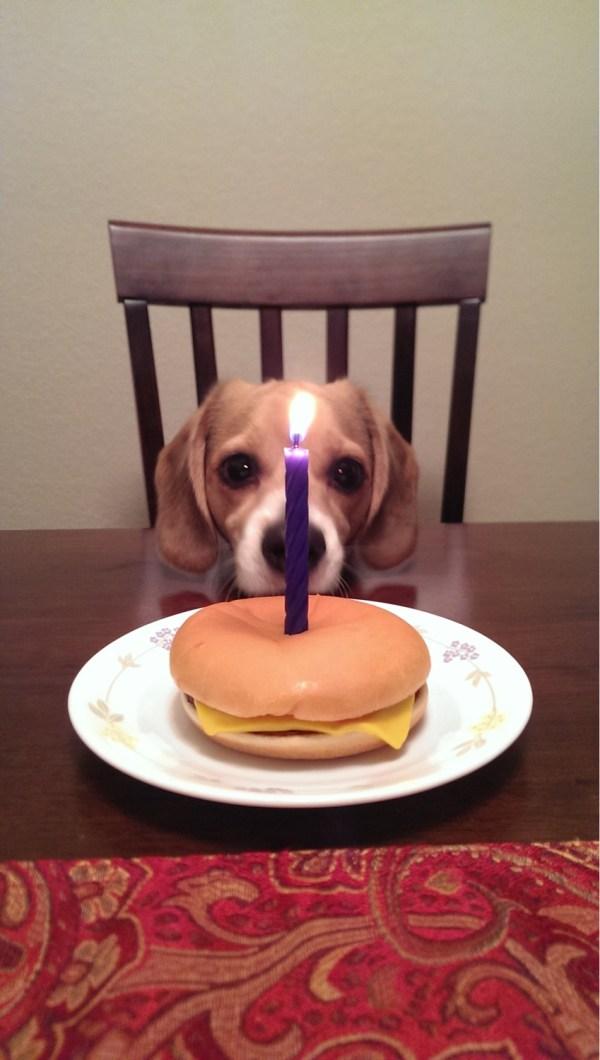 Cute Birthday Beagle Exploring Mars