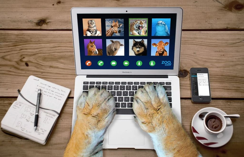 dog paws typing on a laptop