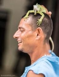 The iguana king.