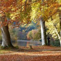 Dunkeld - Big Tree Country Autumn Day Trip from Edinburgh