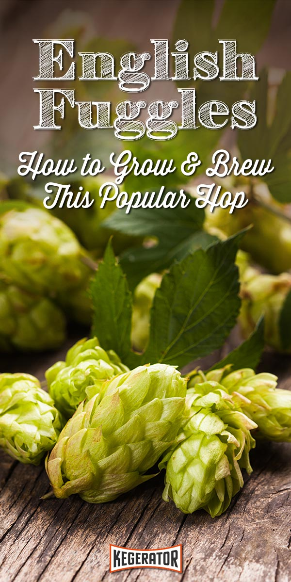 English Fuggle Hops How to Grow  Brew This Popular Variety