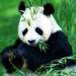 Animals Jigsaw Puzzles APK MODs Unlimited Money Hack Download for android