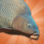 Carp Fishing Simulator – Pike Perch More APK MODs Unlimited Money Hack Download for android