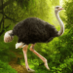 The Ostrich 1.0.4 APK MODs Unlimited Money Hack Download for android