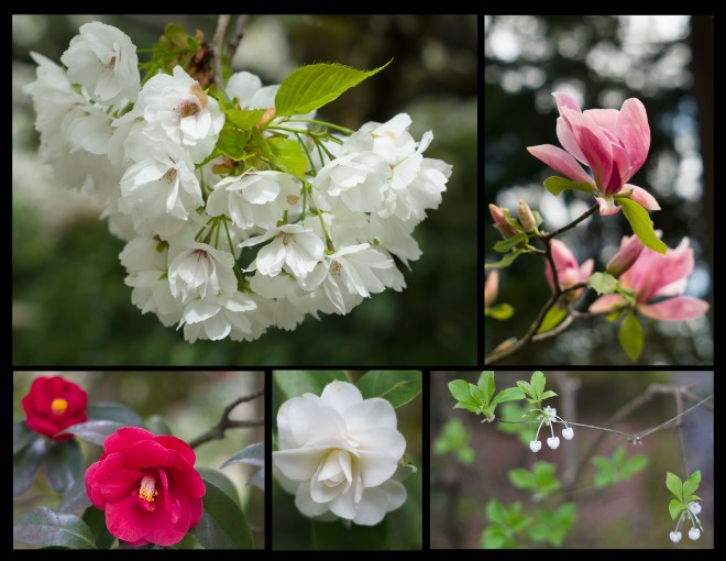 Flowers at Pittock Mansion. Rose Garden, and Japanese Garden in Portland, Oregon