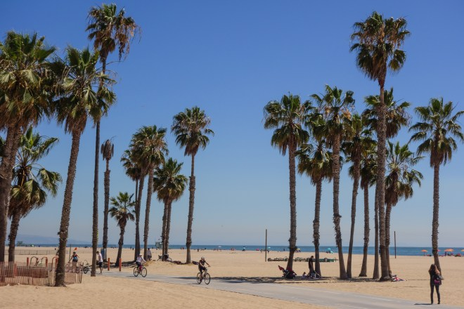 Palm trees in the sand at Venice Beach, California