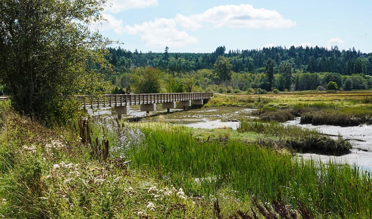 View from the Theler Wetlands nature preserve in Belfair, Washington