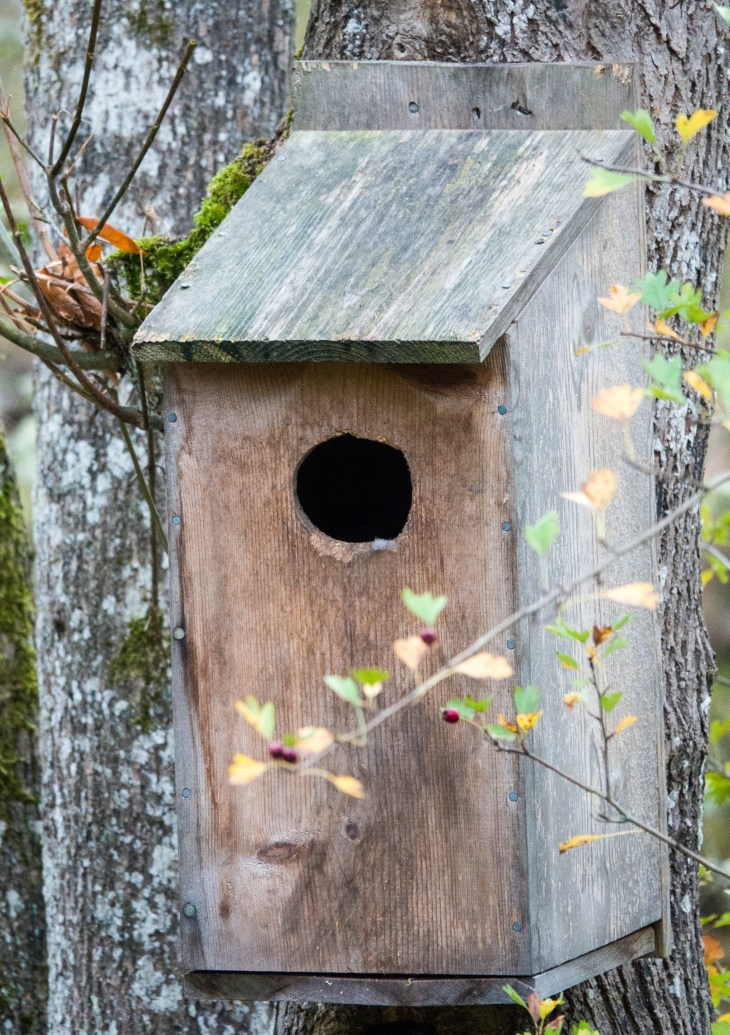 Closeup of our wood duck box - just because