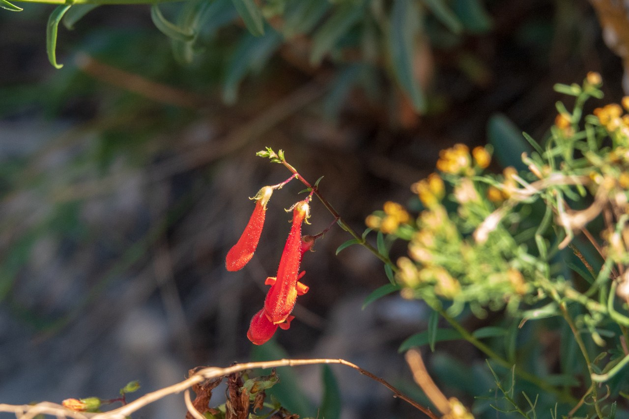 Flowers growing on a Walnut Canyon cliff face.