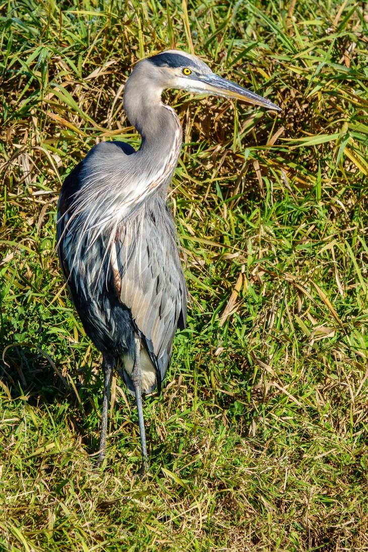 20181011_Fall at Ridgfield Wildlife Refuge_RXX5211