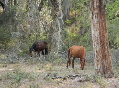 After setting up camp, we hiked to an area on the northern end called The Settlement, home to freed slaves after the Civil War. Met two of the island's many feral horses along the way.