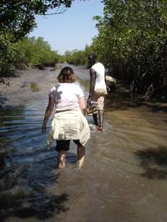 Vadar i mangroveträsken