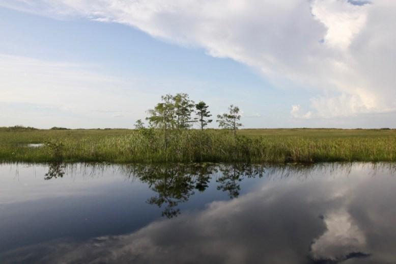 Utsikt över Everglades