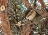 Vogel mit Haus am Castell de Bellver