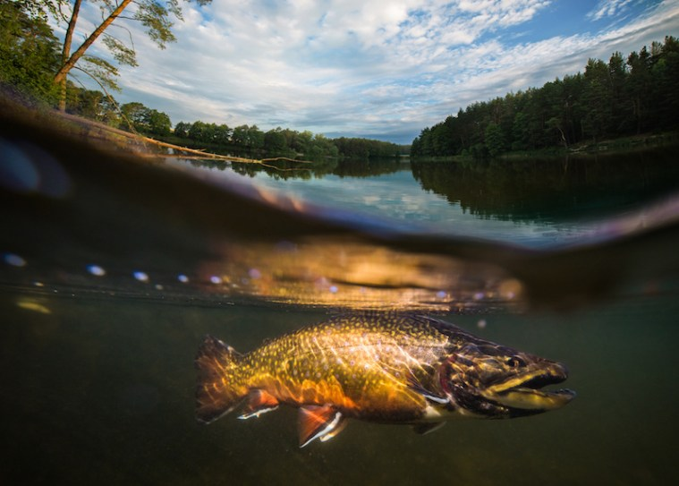 fly fishing tips below the surface