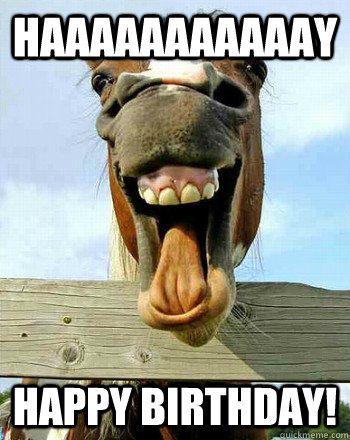 Happy Birthday Horse Meme Amp Funny Songs 2HappyBirthday
