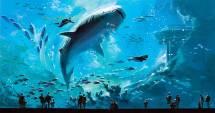 Georgia-aquarium-atlanta-usa