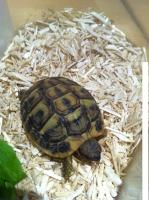 Les 10 espèces de tortues idéales pour débuter