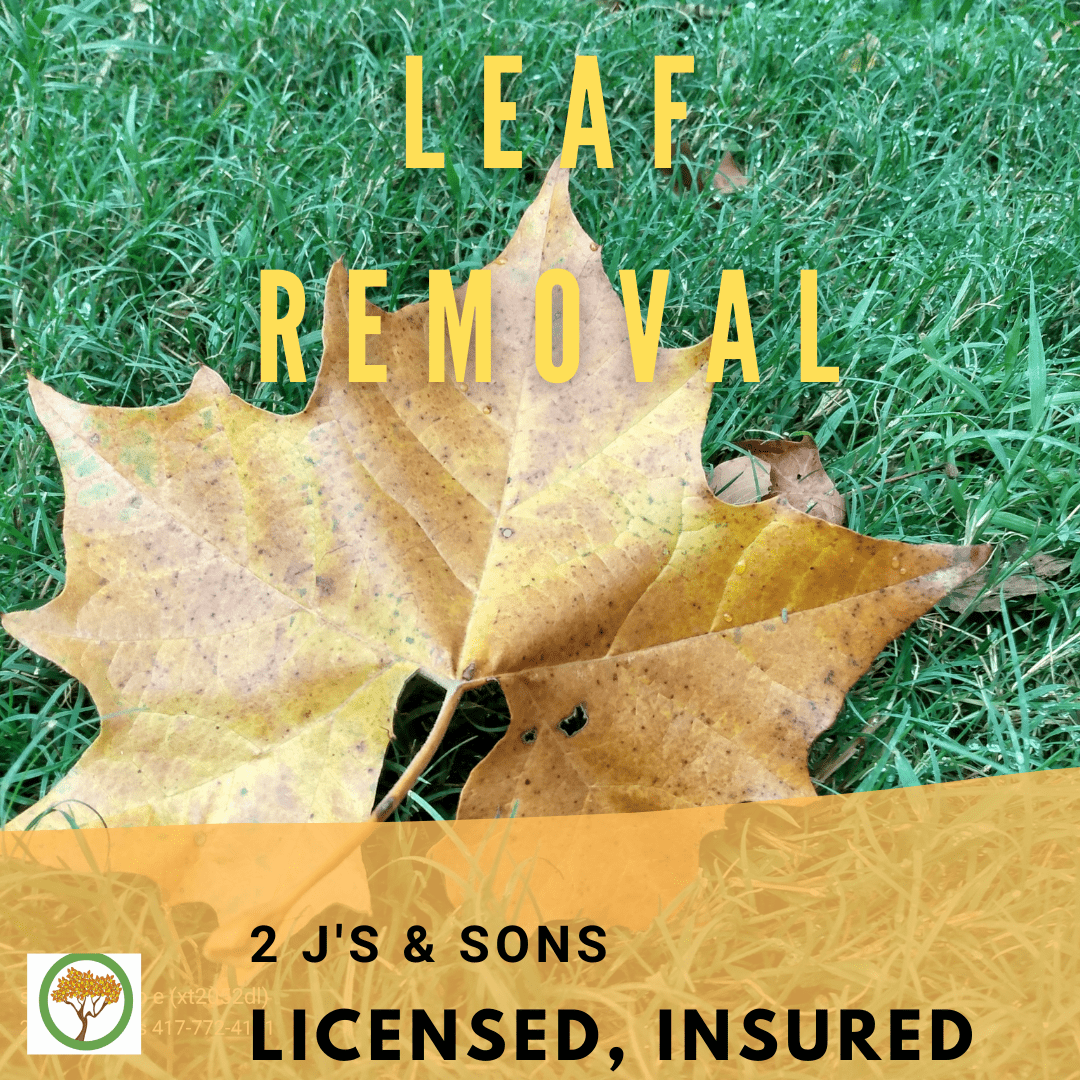 brown leaf on grass, licensed and insured