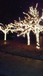 holiday-lighting-trees