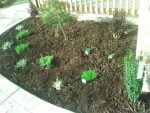 plants, landscaping