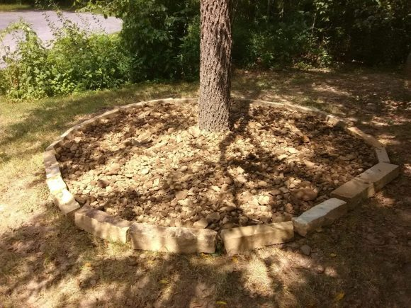 stone tree ring