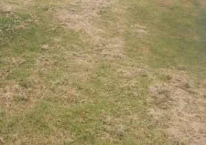 leaving clumps of grass when mowing can kill the new grass growing underneath