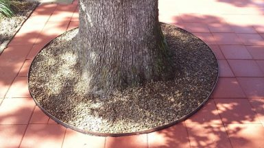 Red Pavers and Tree Ring