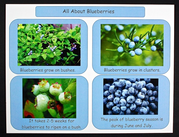 blueberry facts