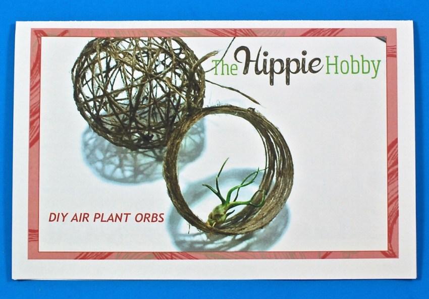 DIY air plant orbs