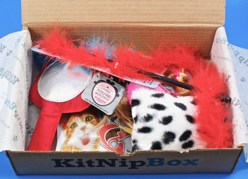 cat subscription box review
