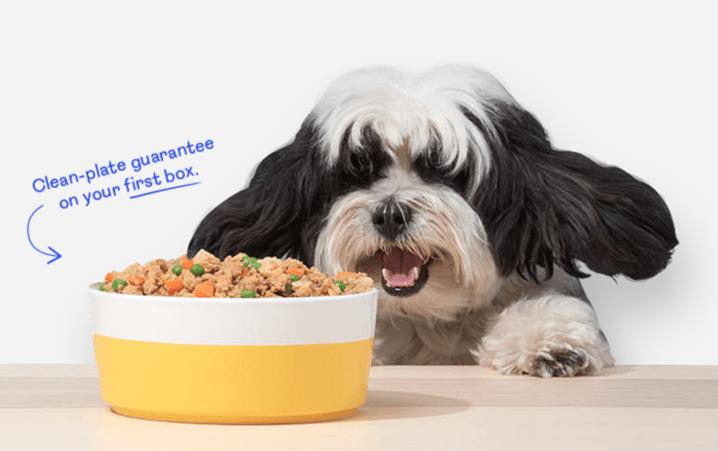 pet plate coupon 2019