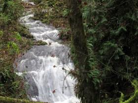 A swollen creek along the Cowichan Valley Trail.