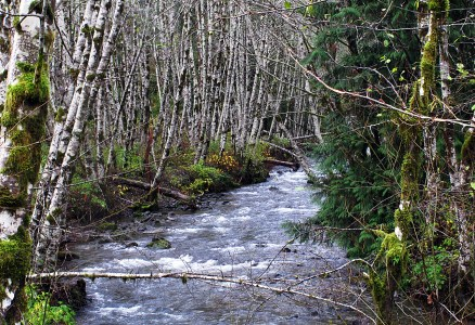 Forest and creek along Pacific Marine Highway south of Lake Cowichan.