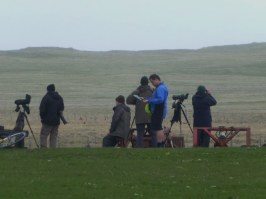 After about 3hrs still waiting and hoping for a sighting of a Corncrake.