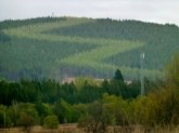 Pine Plantation, have no idea why the ZigZags.