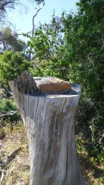 Kangaroos Galore