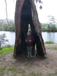The trees are massive