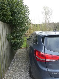 Alex was pleased with his parking but not me, that bush is a Holly Bush.