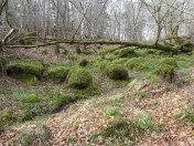 What looks like Button Grass is actually boulders covered in moss.