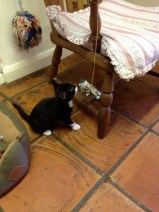 New festival cat, Pip!