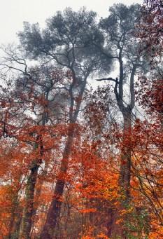 Autumn in Devon by Allson Day