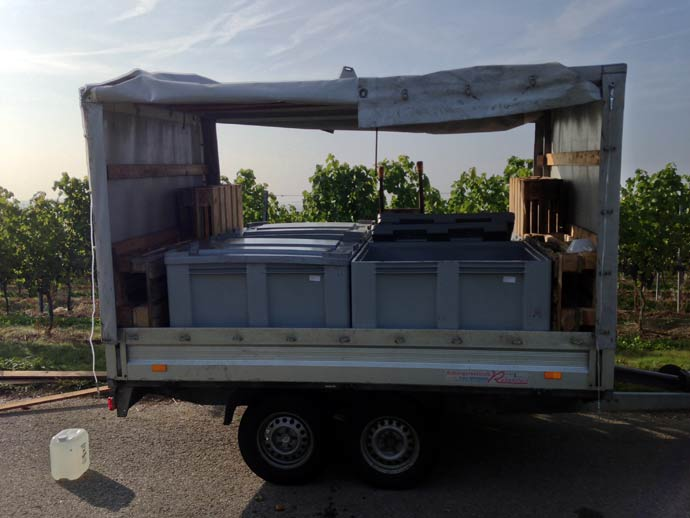 Trailer with grape boxes