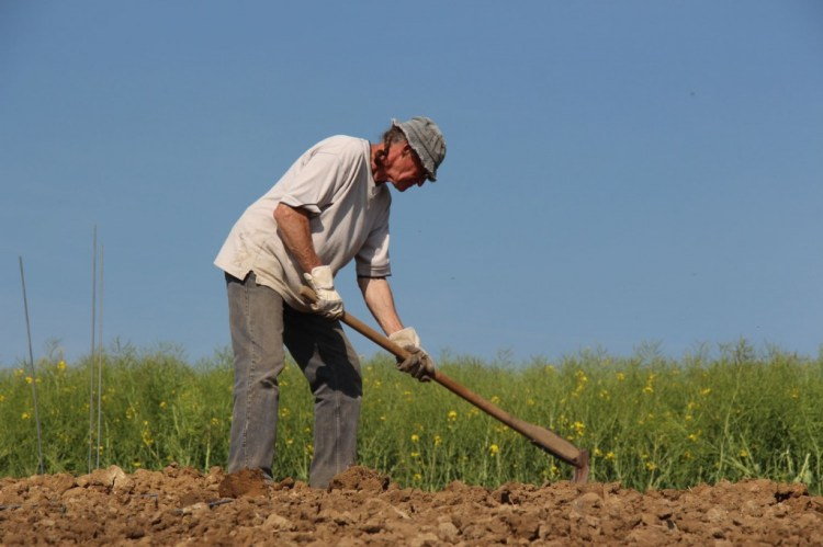 Handwork planting a Riesling