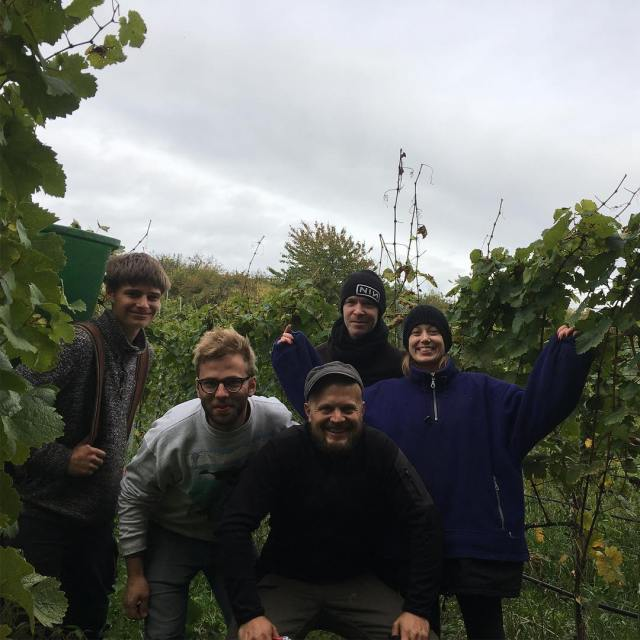 Finally! Last grapes picked today with nickhanel tobyvs myhunwartsen andhellip