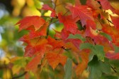 fall leaves 057