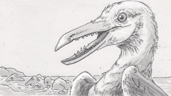 Scanned Ichthyornis skulls show a mash-up of modern bird