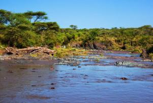 africa_tanzania_serengeti_hippopotamus_group
